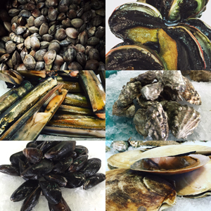 Collage Shellfish